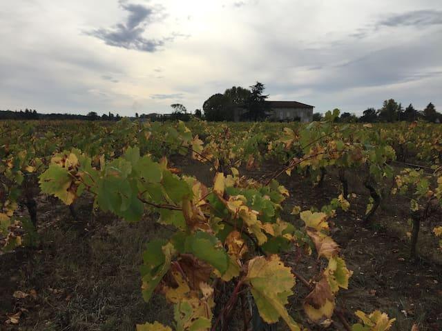 Maison à Gaillac avec vue sur vignoble