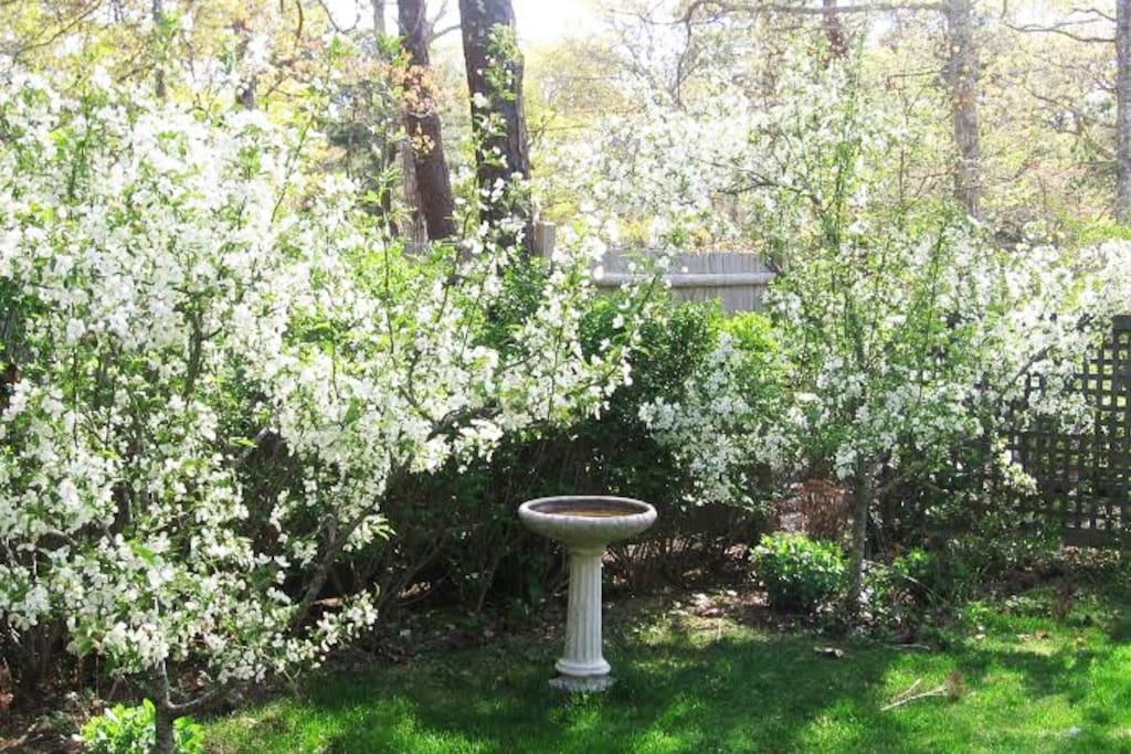 Sit in the yard and enjoy the quiet peacefulness. Sip some coffee or wine and watch the birds flying by!