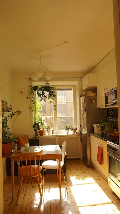 Bright, cosy  kitchen
