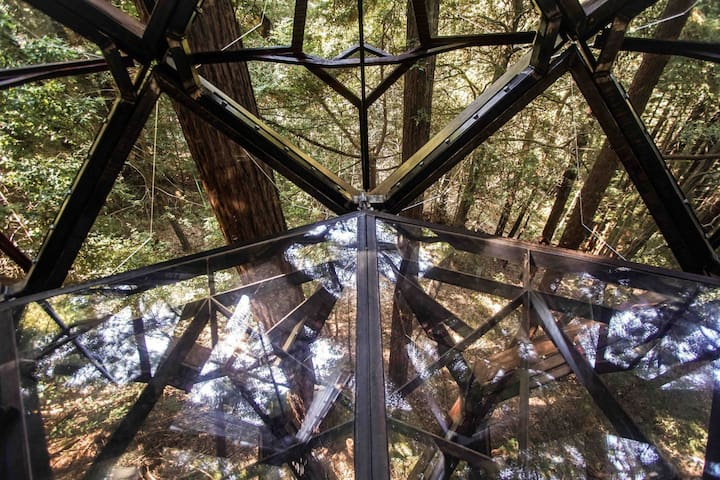 Clear floor panels allow you to see through the structures bottom windows to the forest below.
