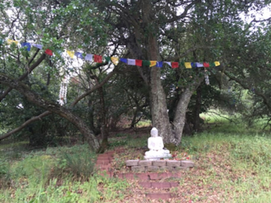 Beautiful wooded hillside yard with Buddha statues and fairy shrines