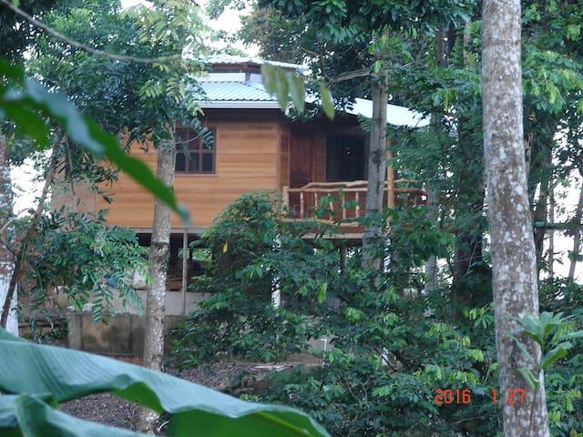 Termas Jilamito Forest Cabin