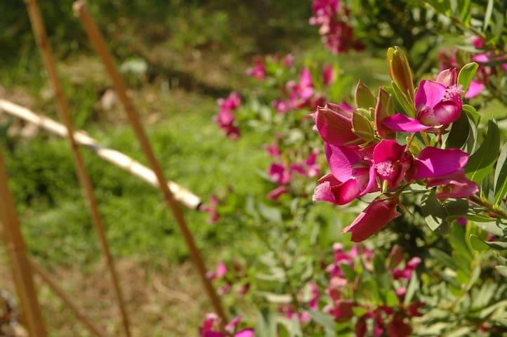 Studio indépendant sur jardin à la Belle de Mai