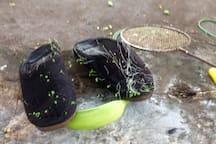 Waldo's (gardener) slippers...