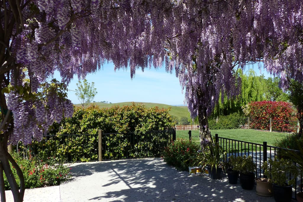 Wisteria covered trellis offers plenty of shade for relaxing outdoors