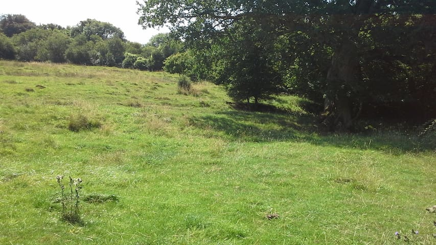 The Abbey Meadows - Wild Camp under the Oak