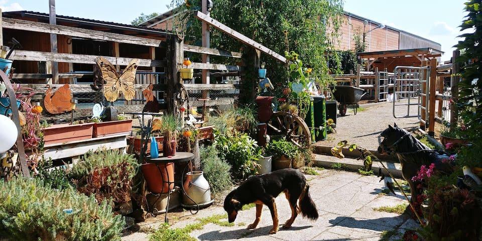 Wohnen + Schlafen am Reiterhof nahe Wien
