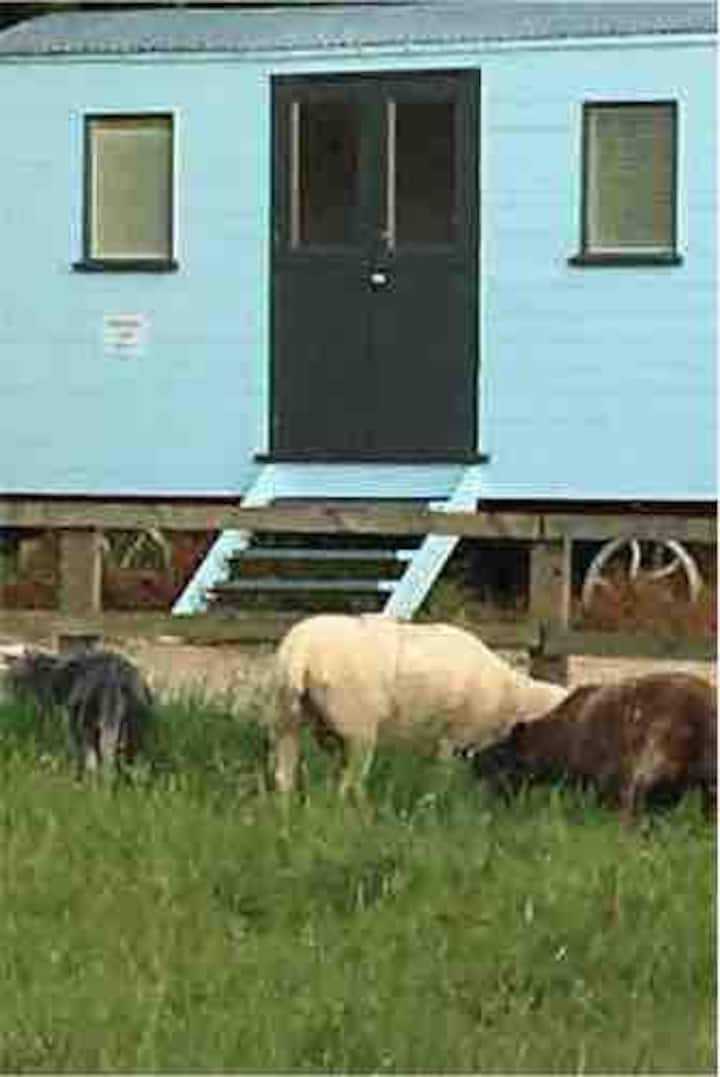 Luxury Shepherd huts which sleeps 2 in each hut