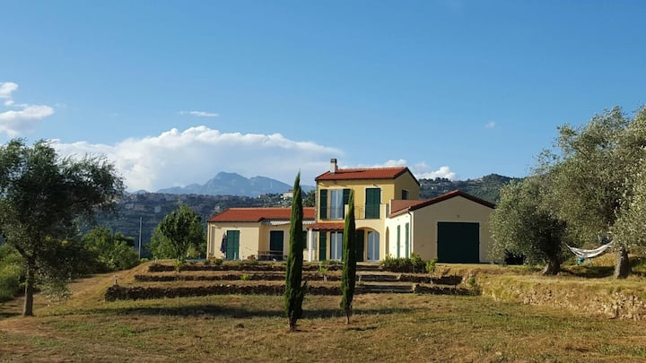 Villa surrounded by olives