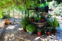 ...surrounded by herb and flower pots