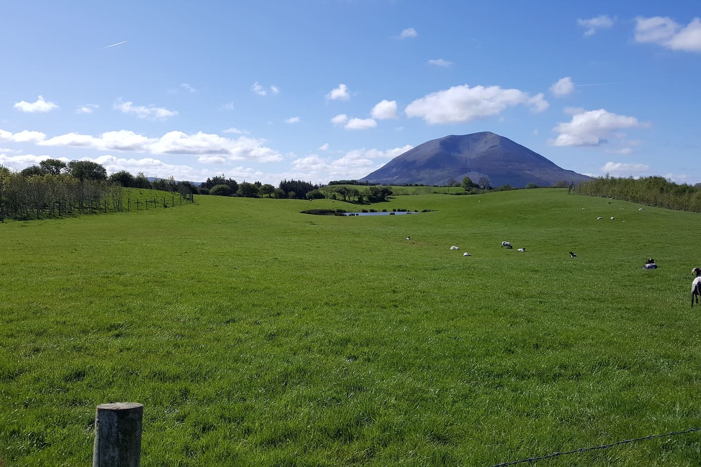 View across one of our fields showing Nephin in the background.   Bike trails, a National Park, the Wild Atlantic Way, the Greenway, countless pristine beaches and much more make Mayo, our area, a very exciting destination for visitors.