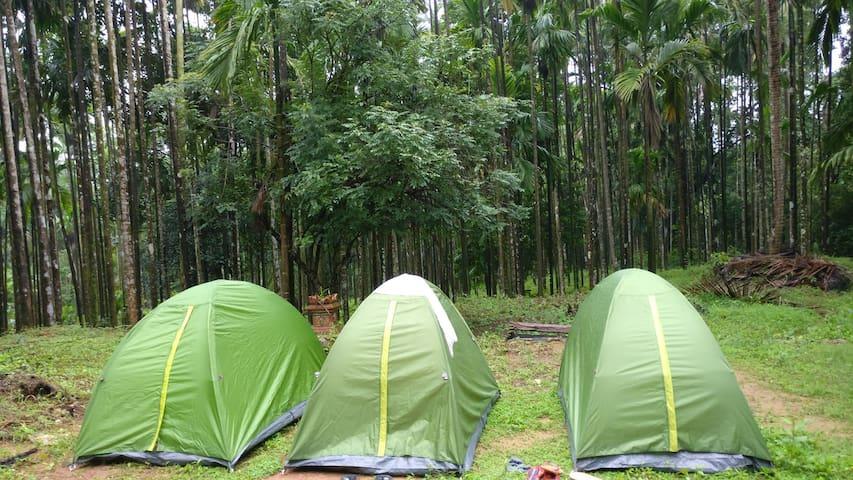 Camping/Glamping Sites at Kudremukh valley