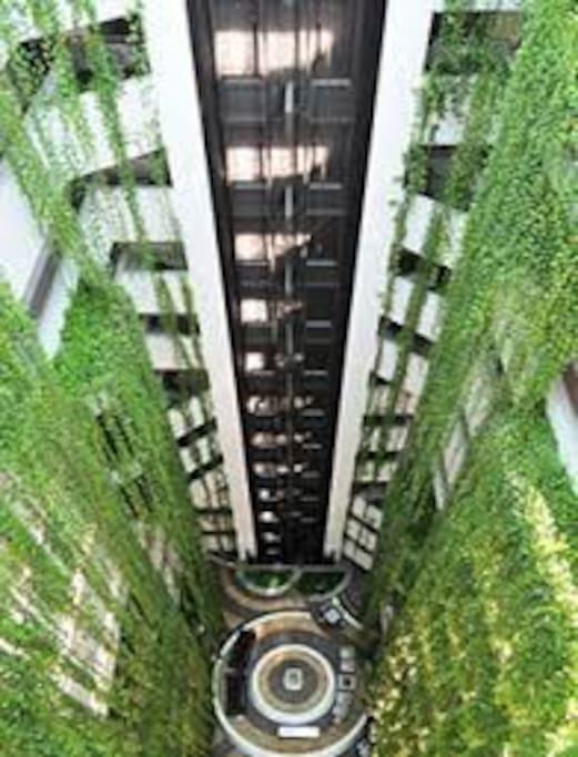 o hotel dispõe de muitas plantas naturais.