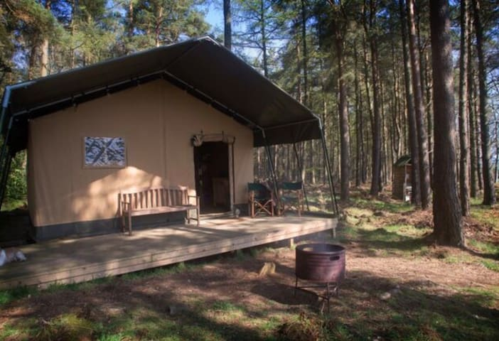 Ruberslaw Wild Woods Safari Tent ~ Gledswing View