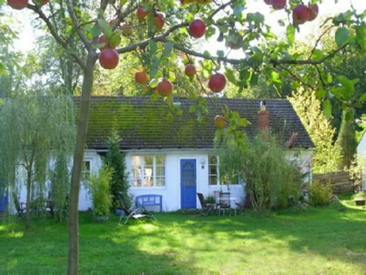 Stechlinsee Little Lindens Cottages 3