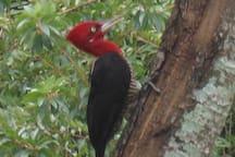 Pássaros exóticos visto do chalé