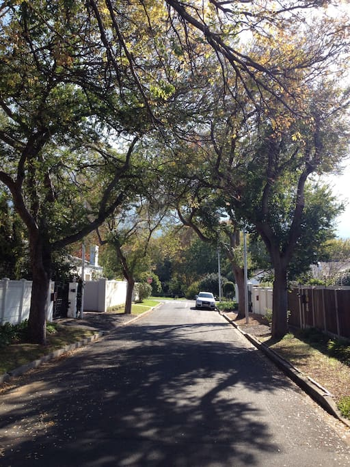 The view down our  leafy street