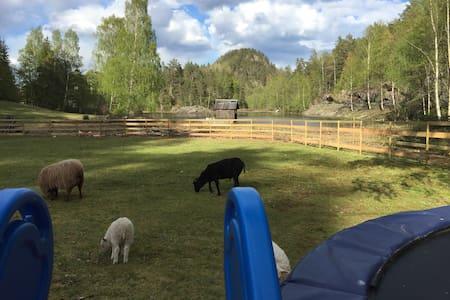 Vangen-Farmen, Ekenes