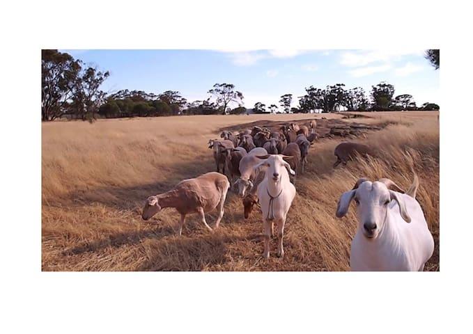 Pucker Farm Animal Sanctuary - Kondinin $60/room