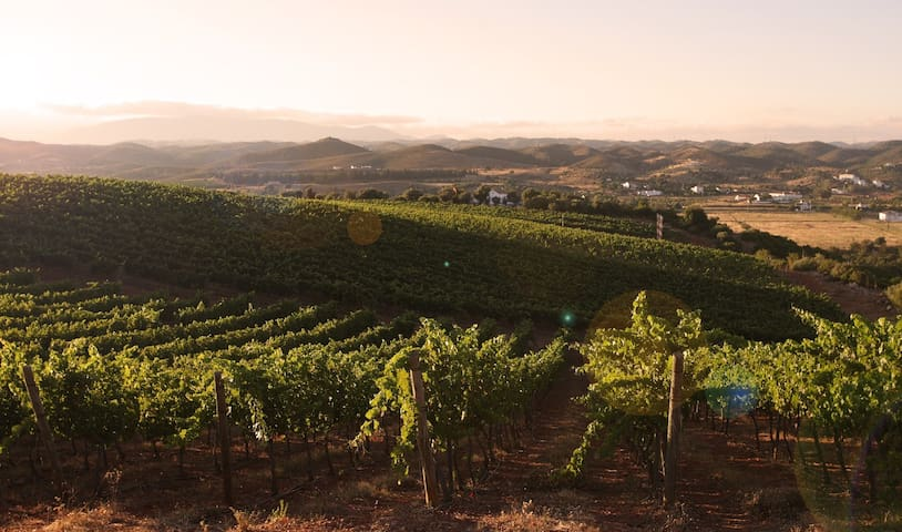 CASA do PLANALTO, nature and vineyards - Lisboa - Rumah