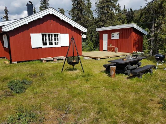 Eggedal Hagglebufjellet. Usjenert tømmer hytte.