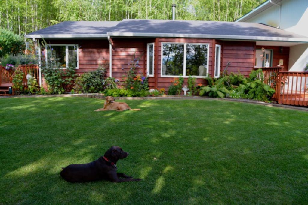 Front view of the house with Hank & Sam standing guard.