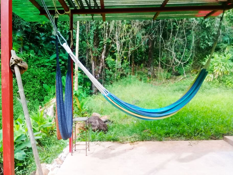 Relax and watch the monkeys, birds and iguanas.