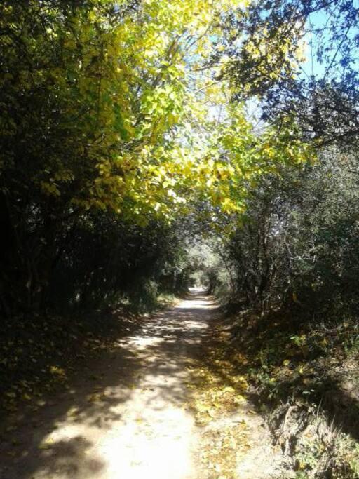 Camino por los túneles vegetales desde el pueblo a Samadhi.