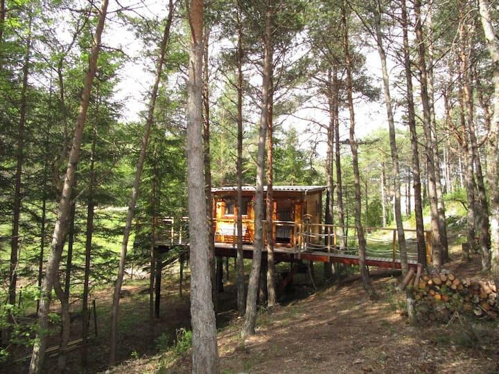 La cabane perchée dans les arbres