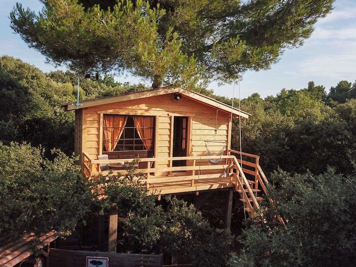 La cabane dans les arbres au cœur d'un vignoble