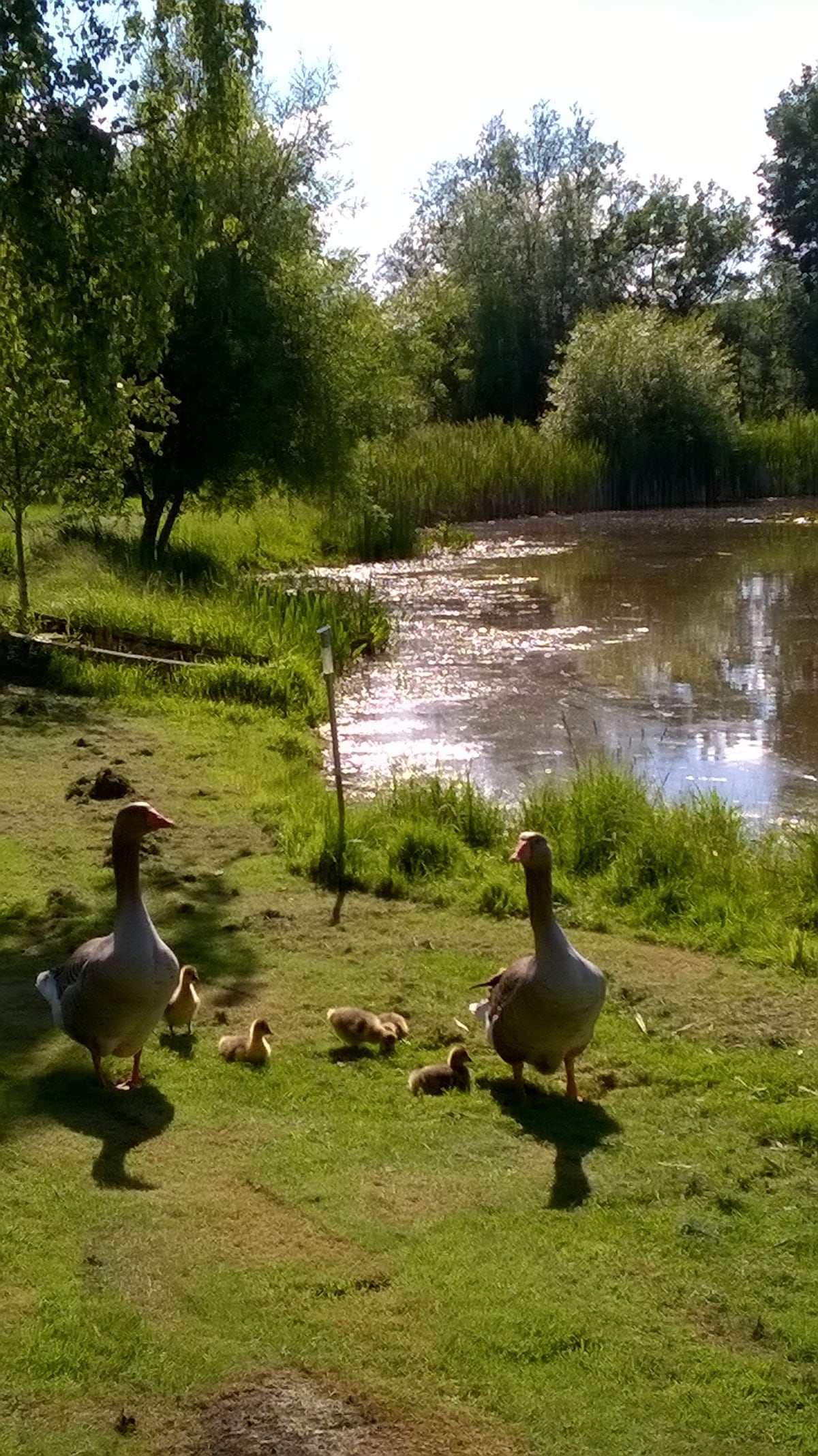 Canada Goose Børn Dba