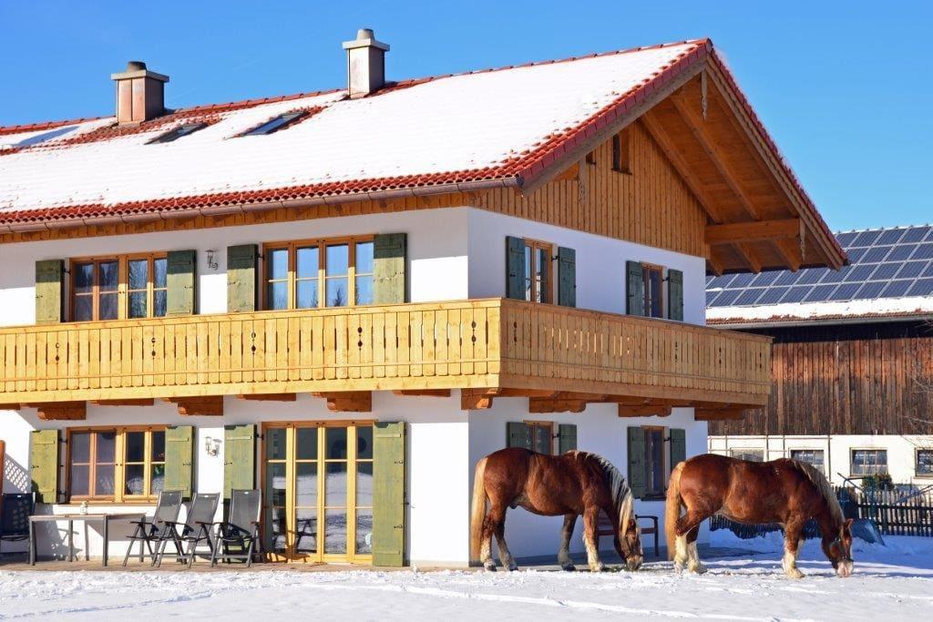 Unser Ferienhaus mit unseren Pferden Maxi und Fonsi