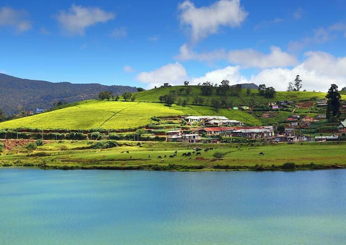 50% off- Nuwaraeliya-Lake View Only $ 12