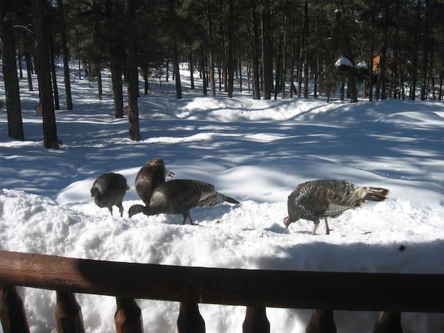 Wild turkeys know where to get food when snow gets 3-4 feet deep!