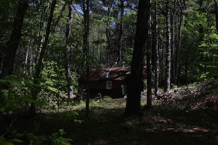 Cozy Off grid cottage with 150 foot Pine trees