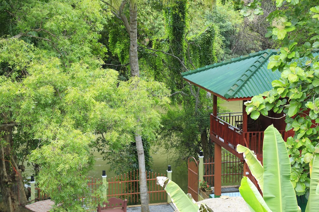 Hotel To View Tree House