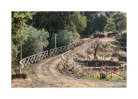 Casedda 2 Kaos, Eno Agritourism A Vineyard on Etna
