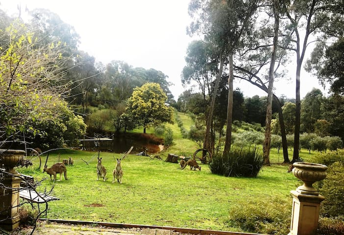 Perfect place to relax with nature Best of both worlds in Daylesford-HepburnSprings township and set on seven peaceful acres with dams olive grove and multi wild life. Relaxing comfort in your romantic retreat with kangaroos often grazing.
