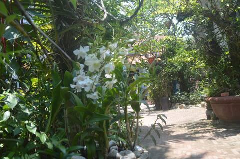 family room @ orchid garden villa