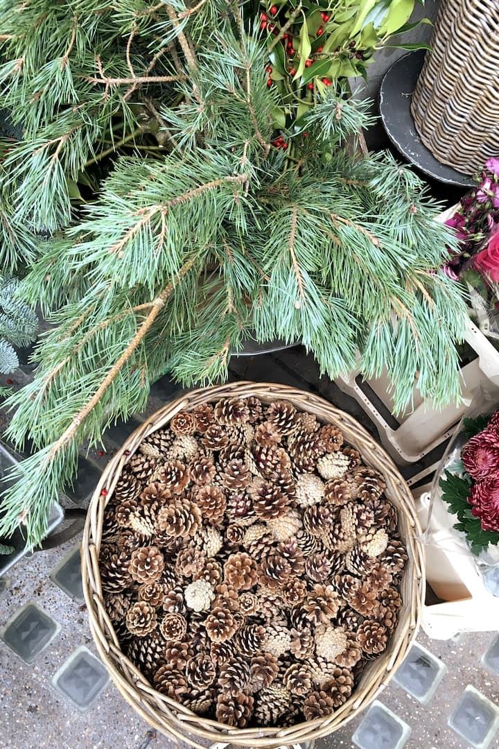 Pinecones and pine needles on display