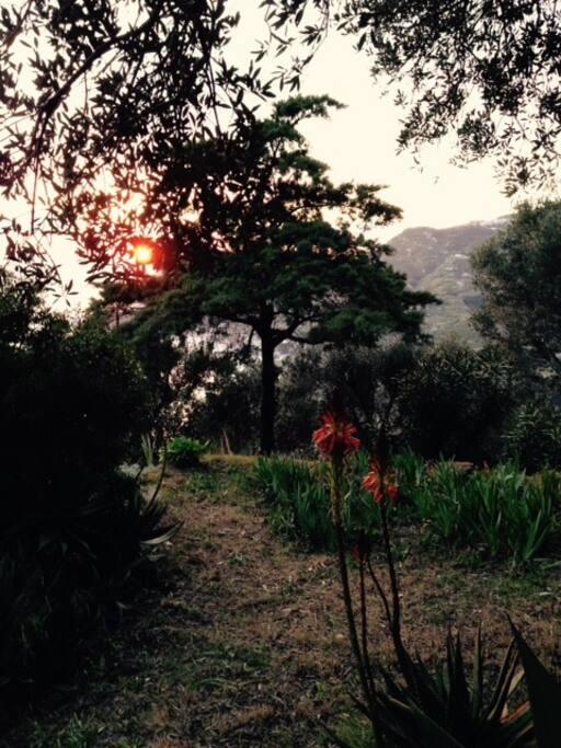 im Abendlicht der Garten