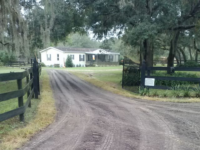 Welcome to Hart Horse Farm! - Brooksville