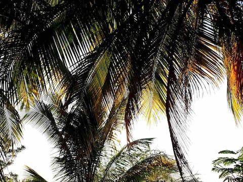 Traveler's Room Los Lagos + minutes from adventure