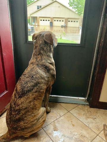 Pet friendly furnished room with gated backyard