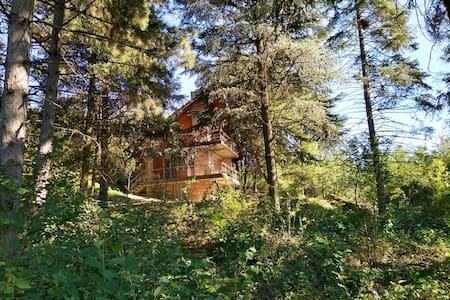 Kuća u šumi iznad Dunava