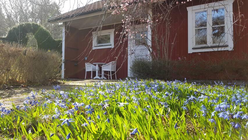 Cottage set in beautiful garden in Sweden