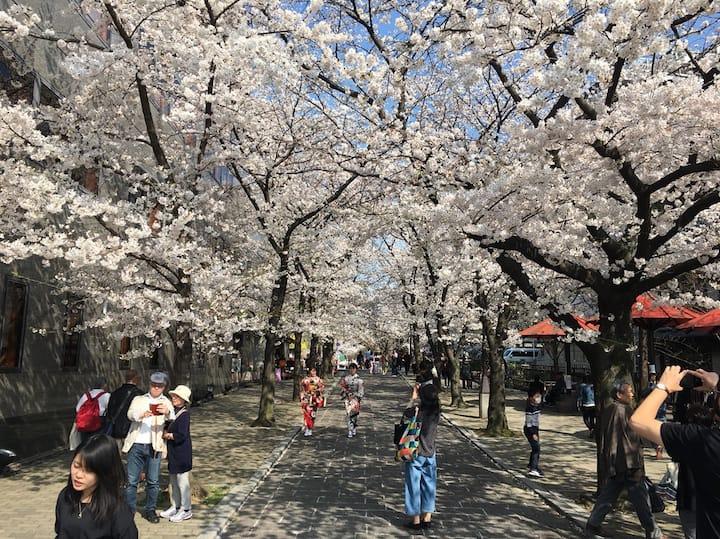 At the cherry blossom season