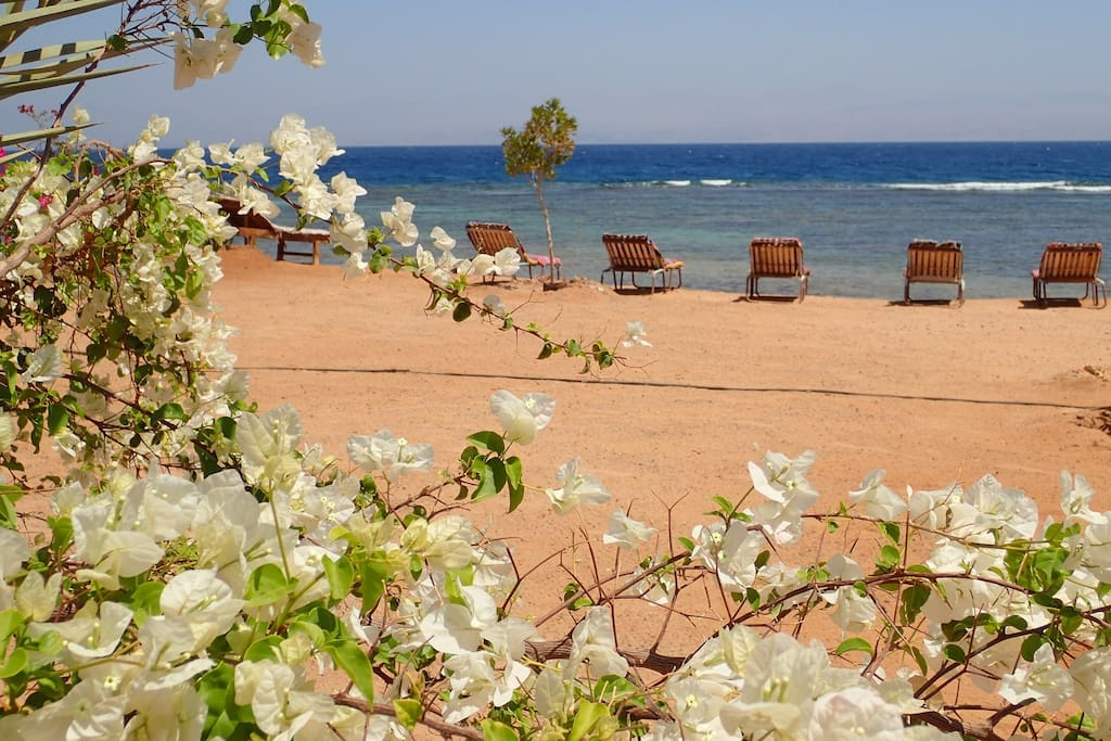 Relaxing at the beach surrounded by flowers