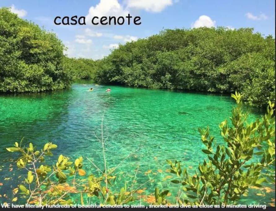 This cenote is Casa Cenote and is perfect for everything from swimming, snorkeling, and cave diving, There are also plenty of Kayaks for rent.