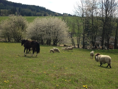Country Farmyard Plánička